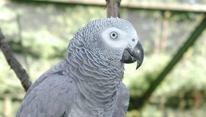 Papagei in Frydenlund Vogelpark auf Fünen