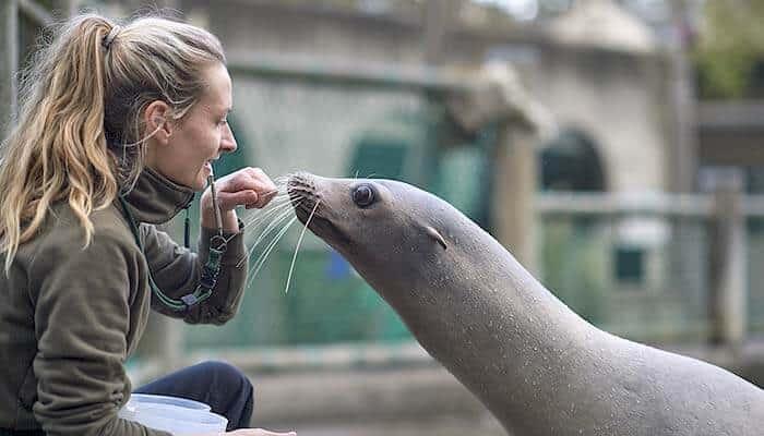Fütterung in Odense Zoo