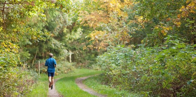 Auf Fünen im Wald laufen